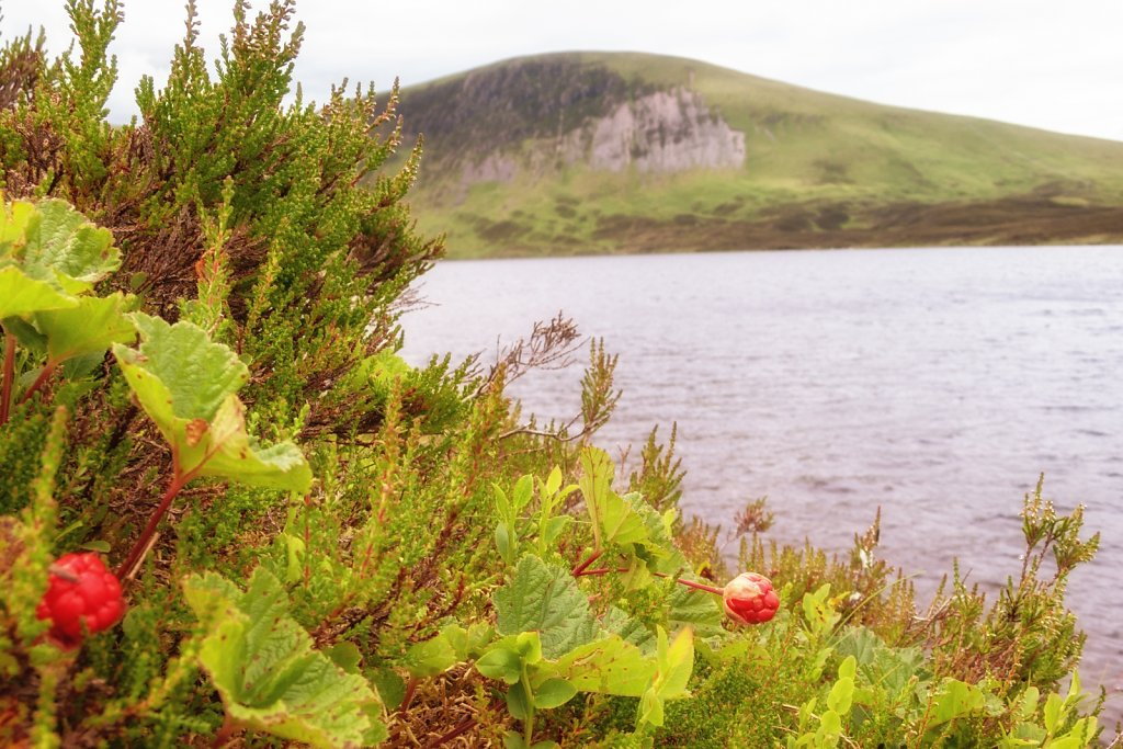 Cloudberries by Loch Skeen