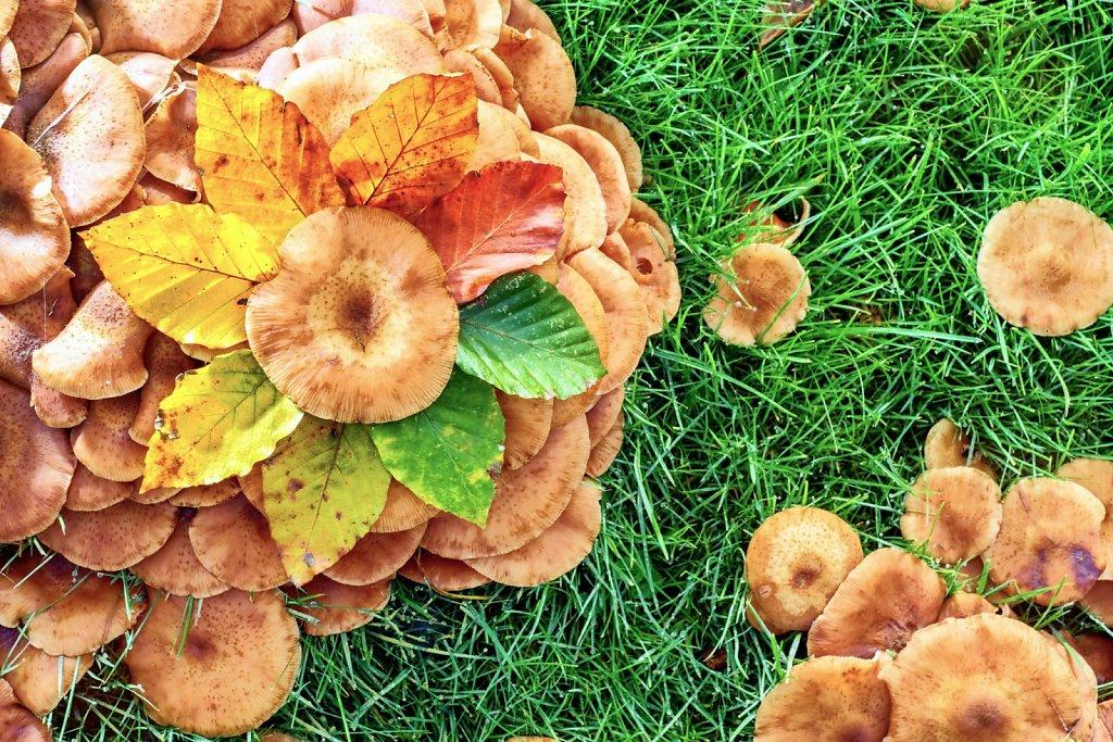 Autumnal colour wheel