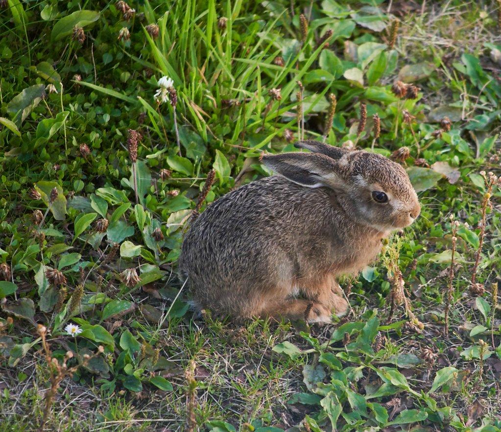 Moffat-Hares-DSC0430319-08-0221-00-20.jpg