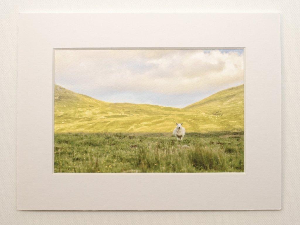 Sheep in mountain shadow