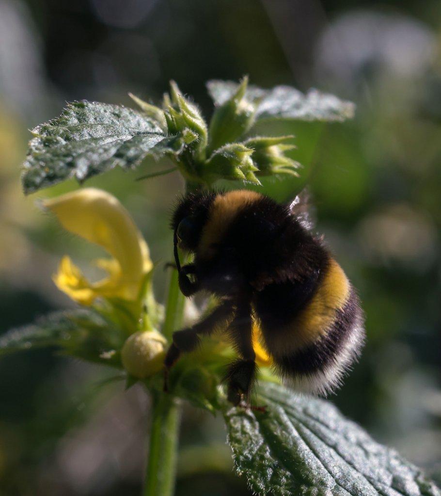 busy bee six