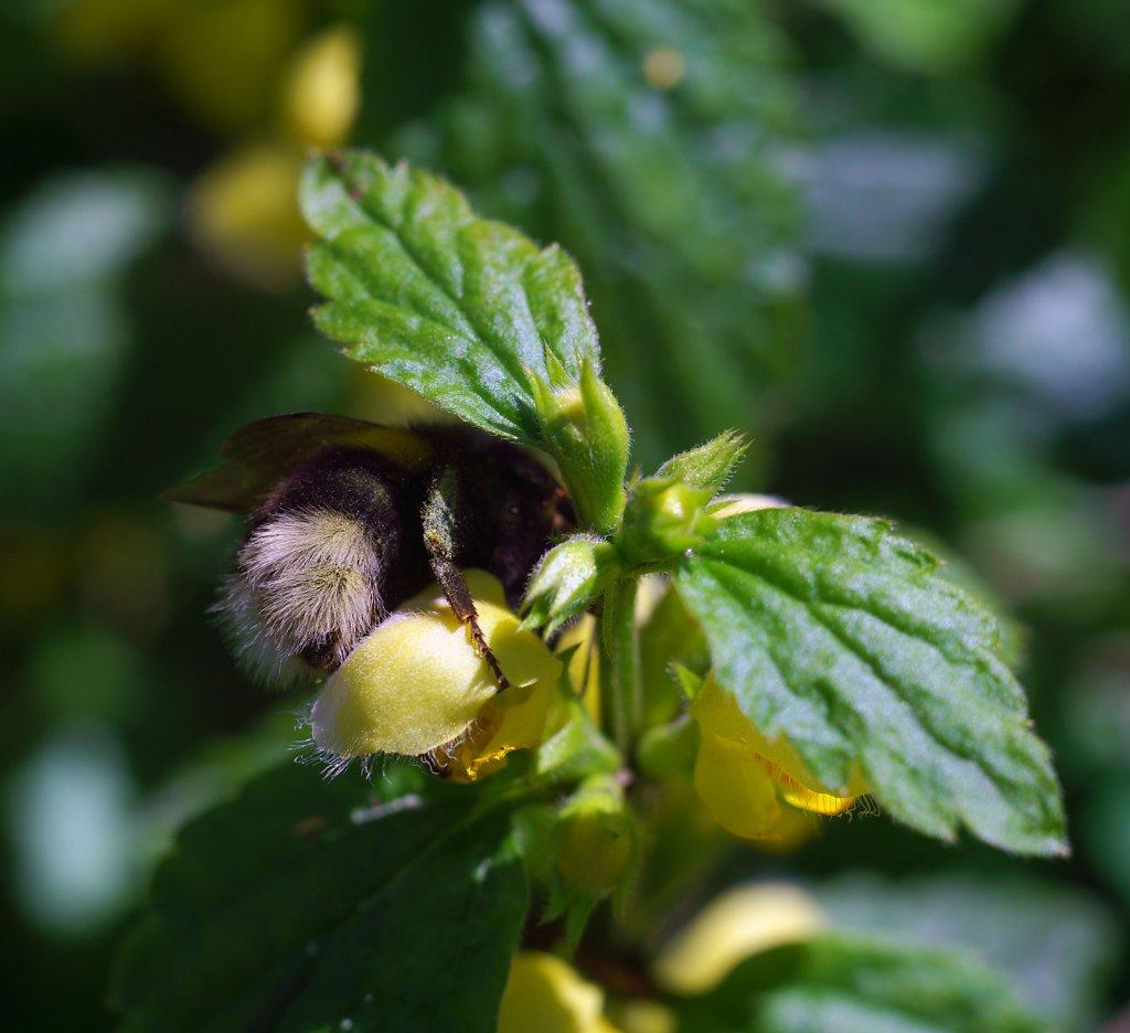 bee bum four