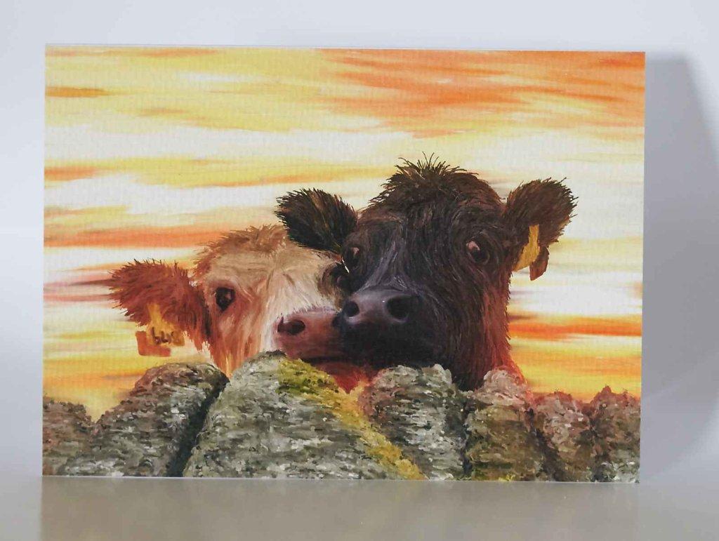 Moffat-Cows-greetings-card.jpg