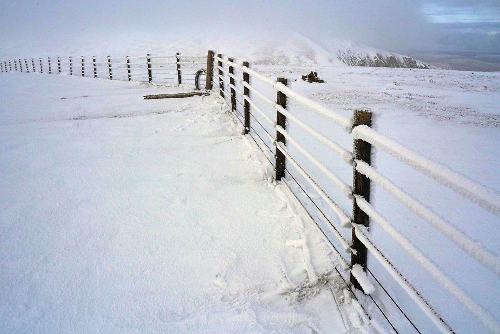 09-otherworldly-fence.jpg