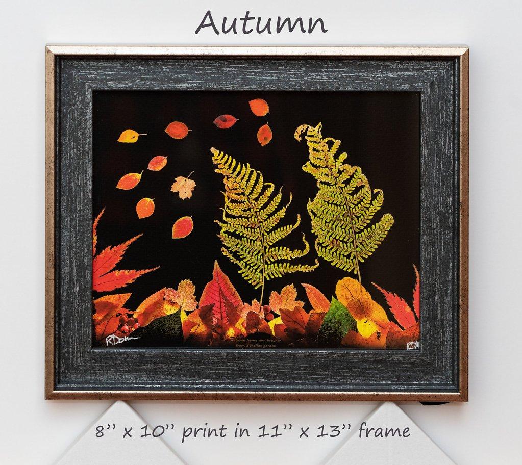 autumn-8-x-10-framed.jpg